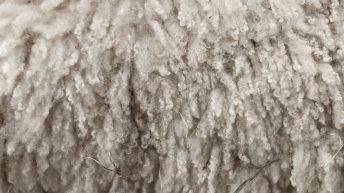 Price outlook not good for wool – merchants