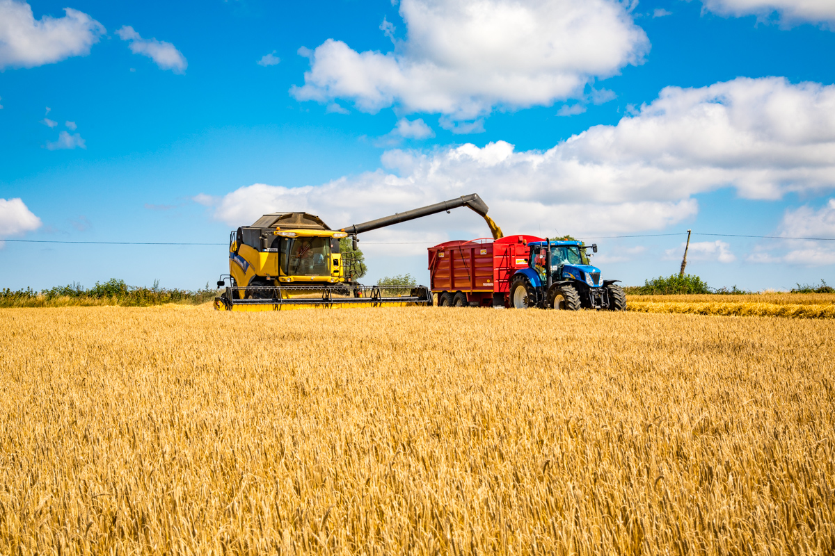 winter barley keeling