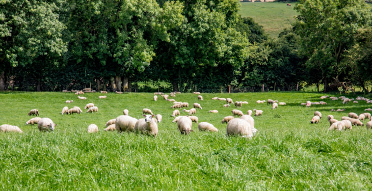 UK think tank calls for farm subsidies to be axed after Brexit