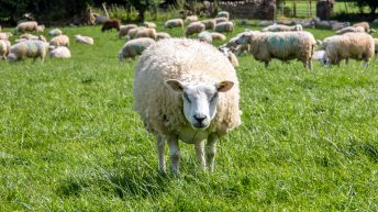Farm Focus: Doubling grass growth and ewe numbers in just five years