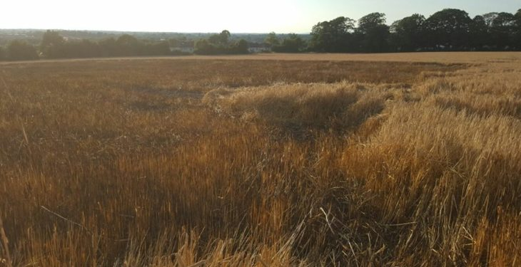 Farmer's barley crop partially damaged in 'suspicious' field fire
