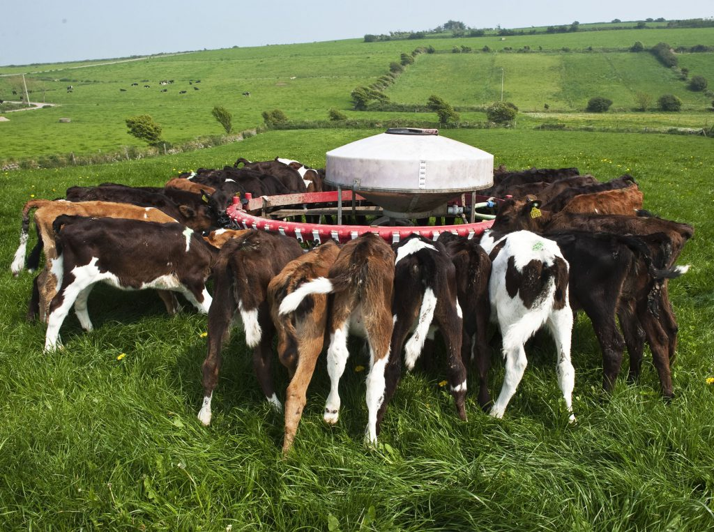 contract rearing heifers dairy
