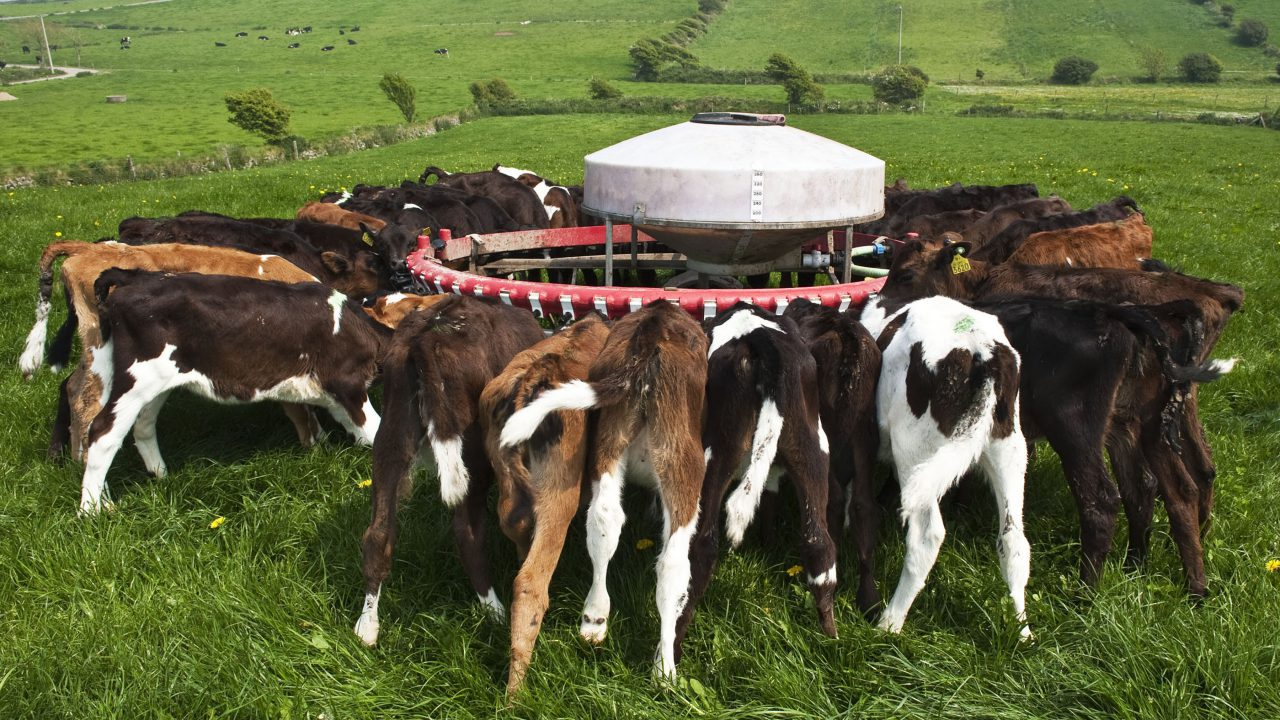 Have you considered contract heifer rearing?
