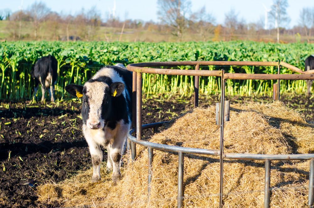 Analysis: Why the future's looking increasingly black and white for beef farmers