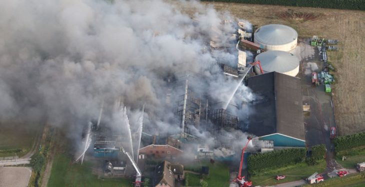 Video: 20,000 pigs die in devastating Dutch farm fire