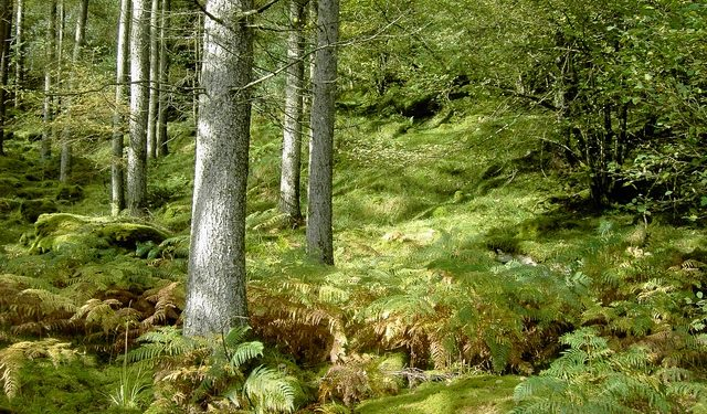Dublin Mountains Makeover to see 9 forests converted from commercial to recreational use