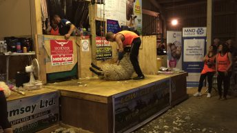 Pics: Scotsman shears 2,000 sheep in 50-hour marathon