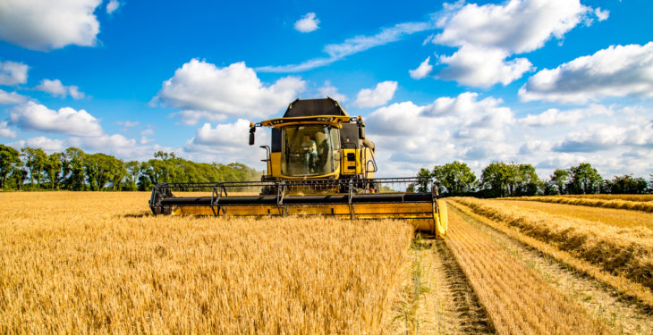 2019 cereal harvest up 20% on last year