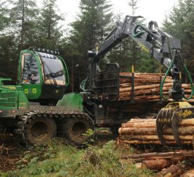 IFA: Number of forest licences issued in March down 45% on January