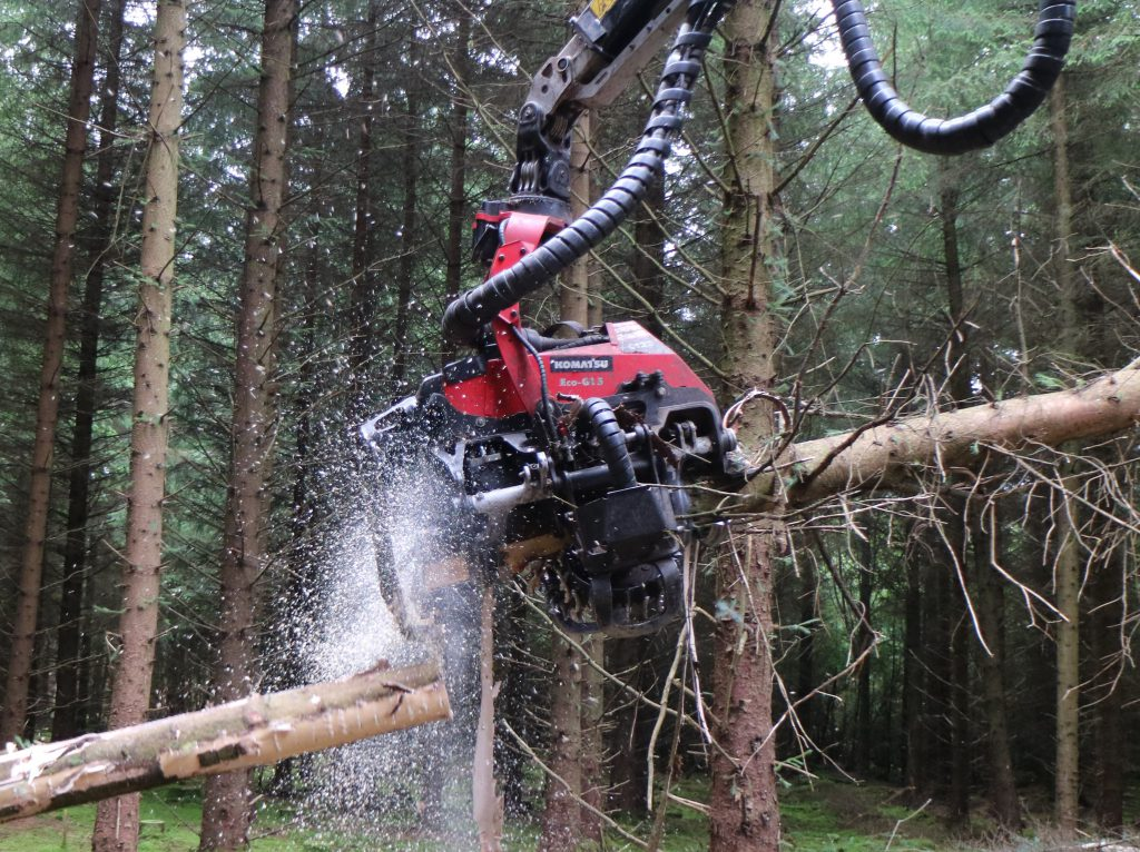 G&G timber harvesting forestry