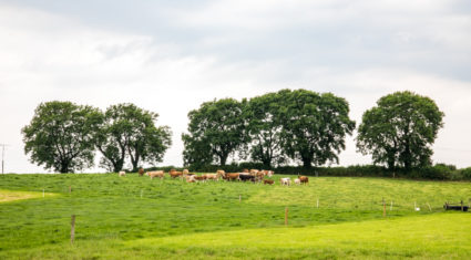 A 50 year journey: Developing animal health products for Irish farming needs