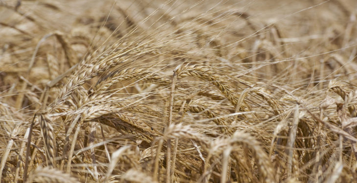 '€200/t minimum for Irish grain'