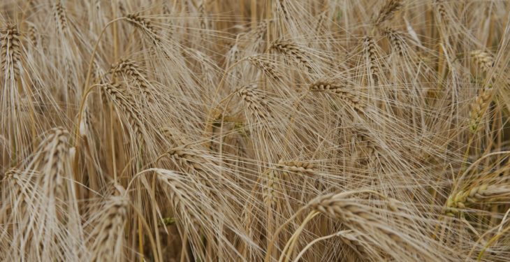 'Feed barley price of €160/t needed'
