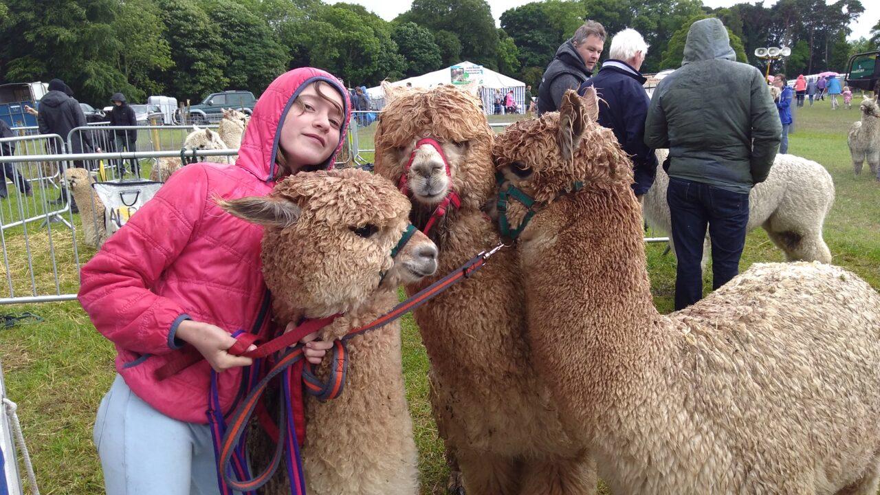 Alpacas in huge demand as 'extraordinary livestock'