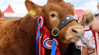 Show results: The big winners at this year's Tullamore Show