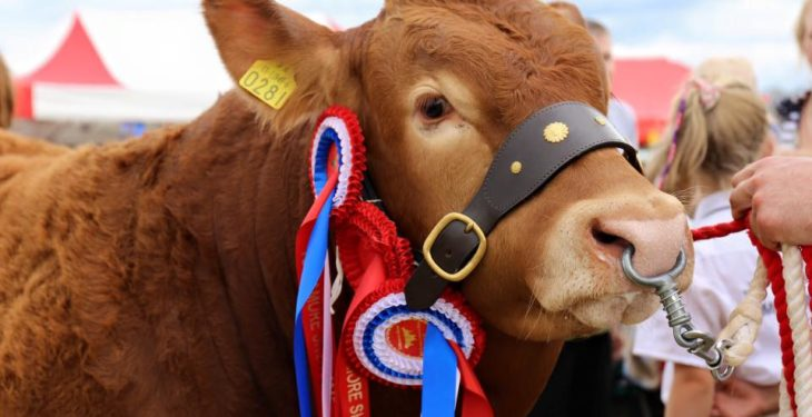 Deadline for entries to Tullamore Show set to close