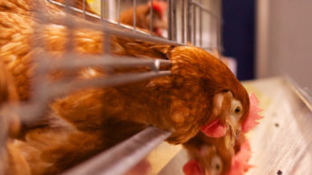Major poultry conference to take place in Co. Tyrone
