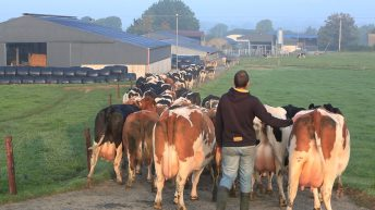 Protecting milk quality during dairy expansion