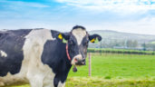 Rising milk price sees dairy investment confidence grow