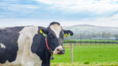 EU voluntary milk reduction scheme deemed 'a great success'
