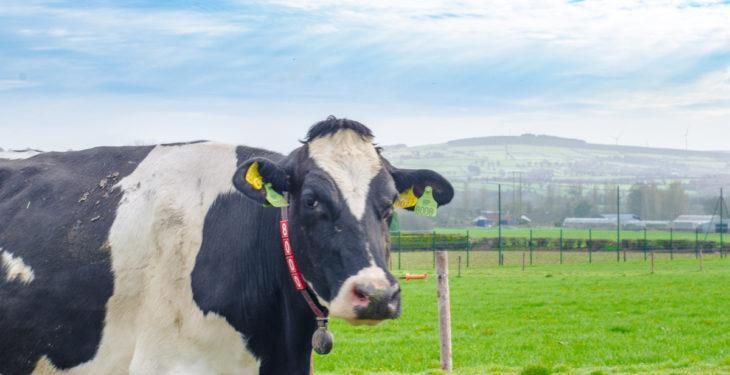 EU voluntary milk reduction scheme deemed 'a great success'