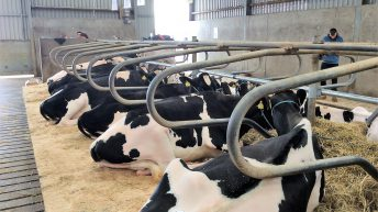 Pics: €6,500 top price at Holstein Friesian open day sale
