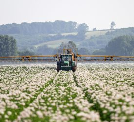 Blight warning for early-sown crops in Munster