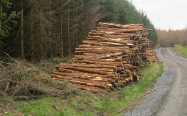 Could forestry help protect farm incomes as Brexit looms?