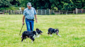Video: Ireland's best sheepdogs take to the fields of the Model County