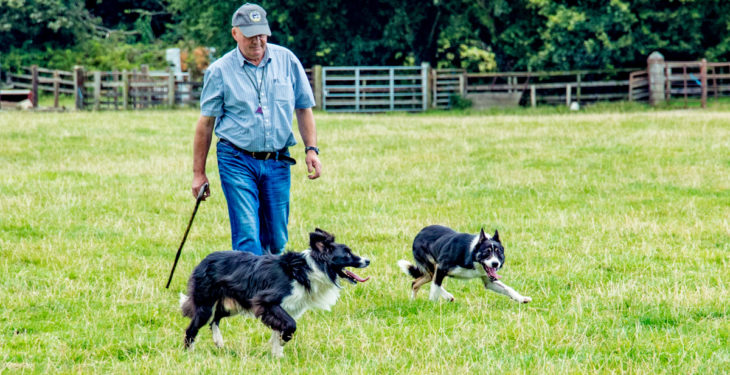 Video: Ireland's best sheep dogs take to the fields of the Model County