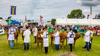 Video: Hundreds of cattle battle it out for top honours at the Tullamore Show