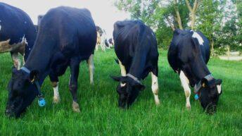 'Milking More from Grass' event set for September