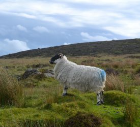 Farmers on Comeragh Mountains awarded €119k for biodiversity