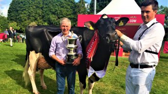 Virginia Show debutante takes Baileys Champion Cow title