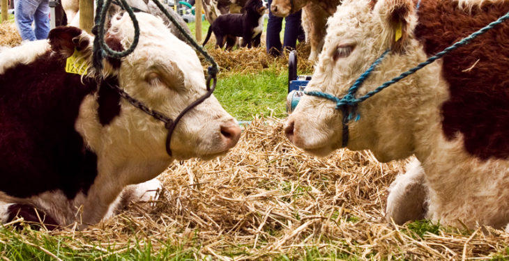 August agri shows in abundance this weekend