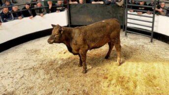 Portlaoise Livestock Mart enters new chapter