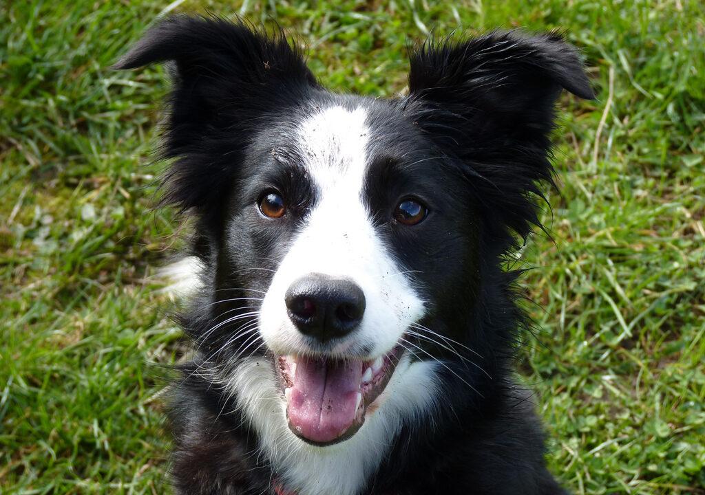 Aontú's 'puppy farm bill' progresses