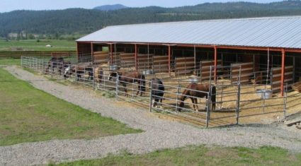 Horse rescue appeals to farmers for hay barns