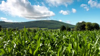 'I think we can look forward to a very good crop of maize'