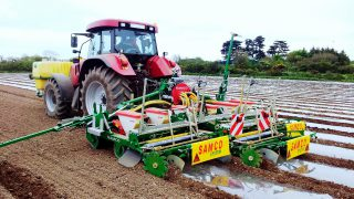 Popularity of maize as a buffer feed on the increase