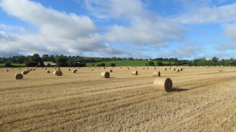 Straw price: Rain and poor yields…prices not settled
