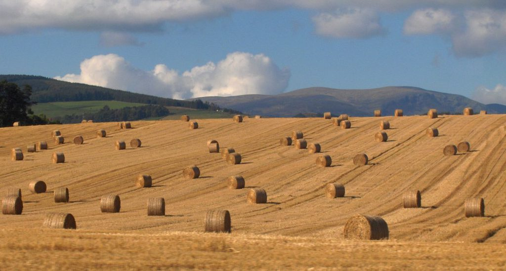 Round bales of straw reaching highs of 20 bale in places for Straw bale house cost calculator