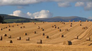 Round bales of straw reaching highs of €20/bale in places