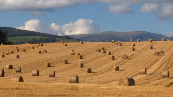 One million fewer bales of straw made on Irish farms