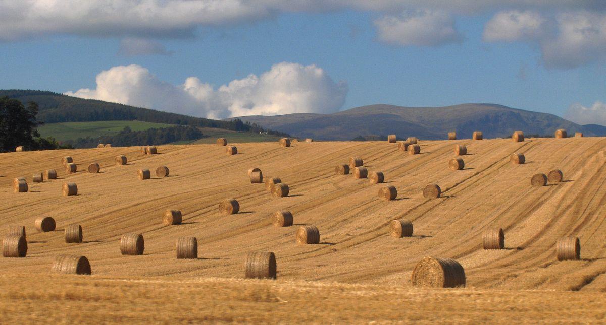 straw prices bales, tillage