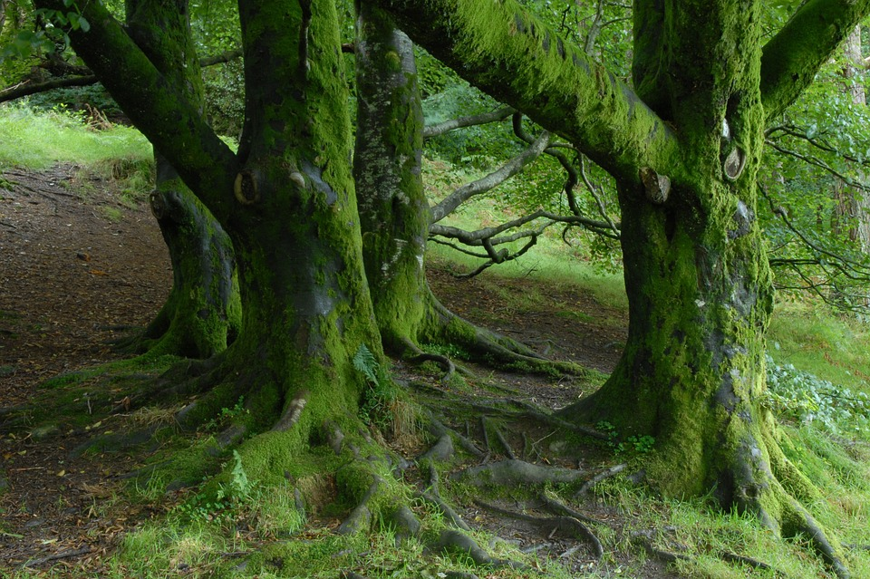 Agriculture, logging, and livestock farming top threats to world's trees – report