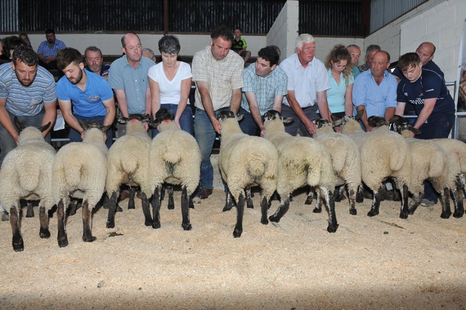 tullow sheep borris sheep sale