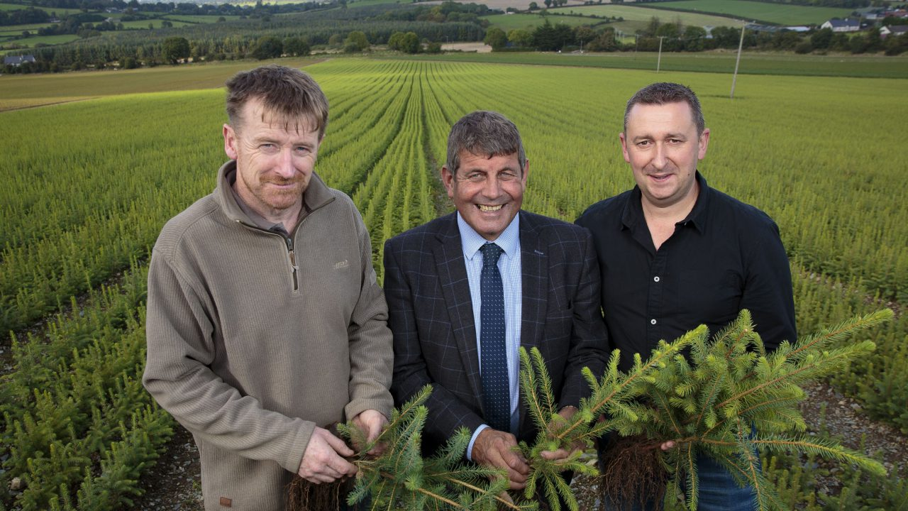 'Complementary activity': Farmers encouraged to consider forestry