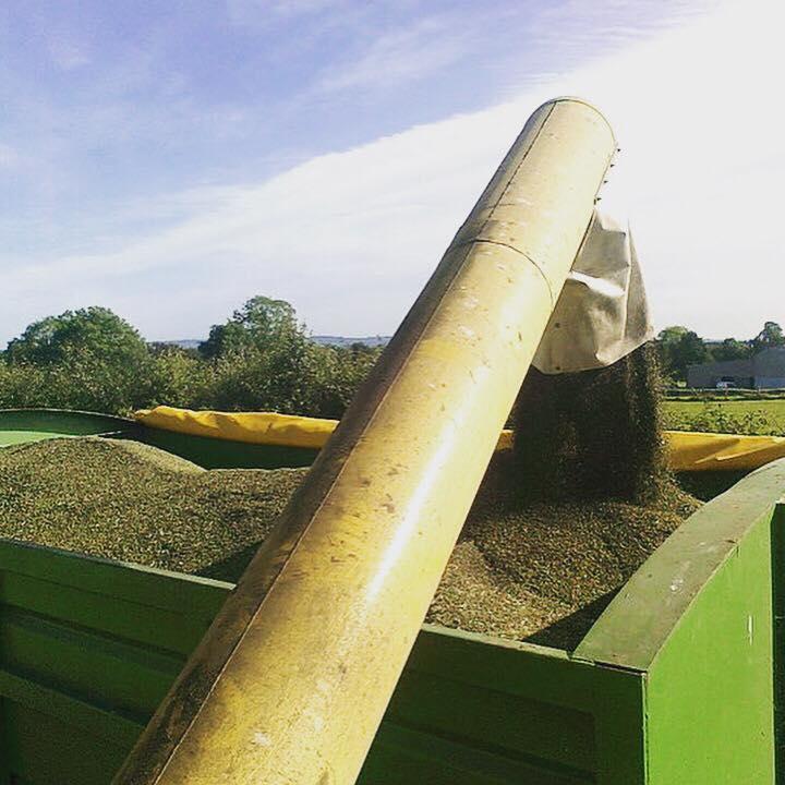 harvest, rapeseed oil