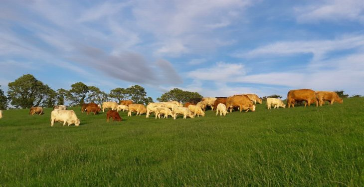 'The best investment in the farm is in grassland management'